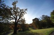 Schlosspark Ettersburg. Bild: Maik Schuck.